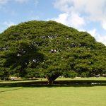 この木なんの木でおなじみの日立の樹 草野仁が明かしたその年間維持費に仰天!