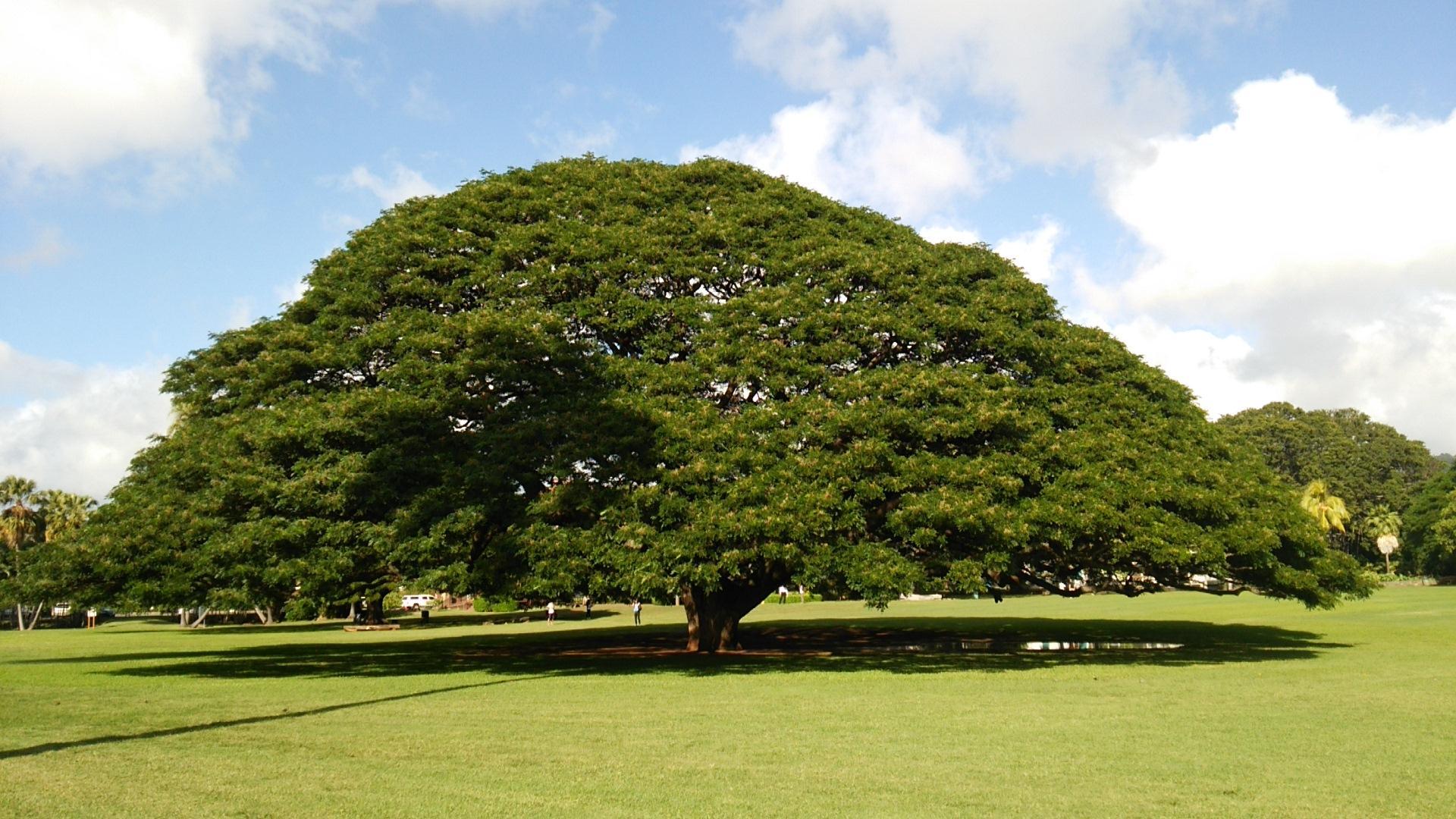 全文表示 | 「この木なんの木」維持費は年間5000万 …
